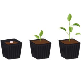 plantedag
